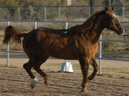 Mack running