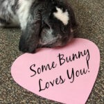 """Rabbit on floor next to pink heart with black script """"Some Bunny Loves You!"""""""