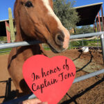 """Red heart with black script """"In honor of Captain Tom"""" held in front of chestnut horse in a metal round pen"""