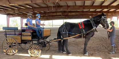 Draft horse hitched to wheelchair-accessible wagonette